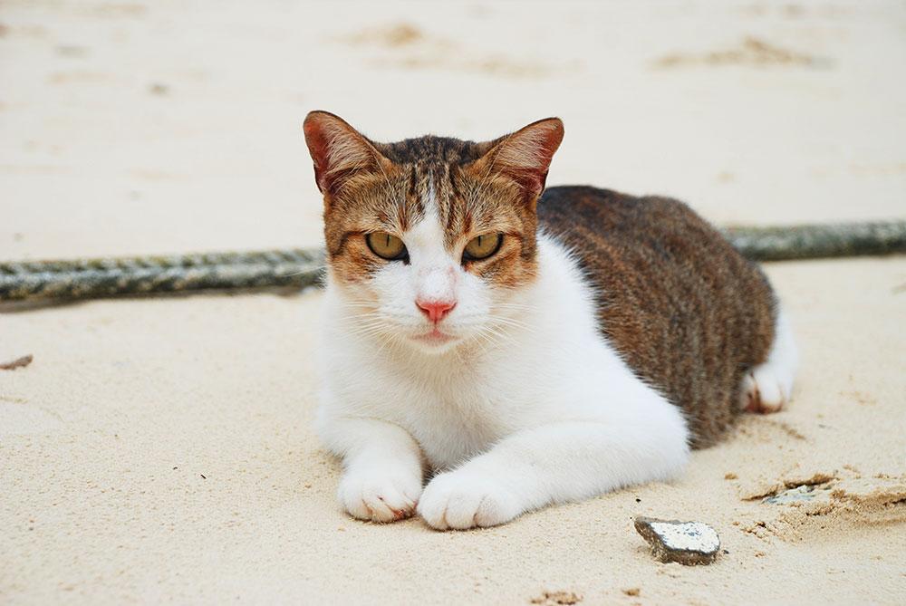 Un gato en la playa