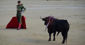 Toro y torero