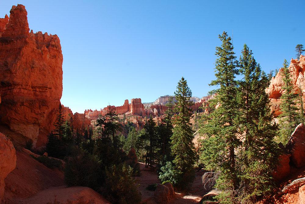 Árboles en Bryce Canyon