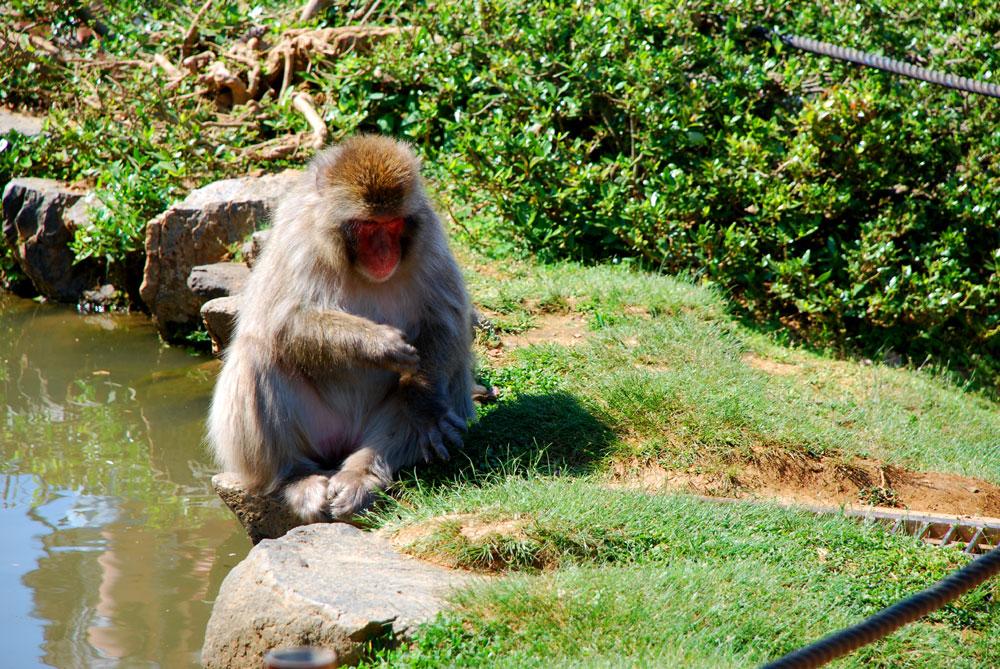 Monos en libertad