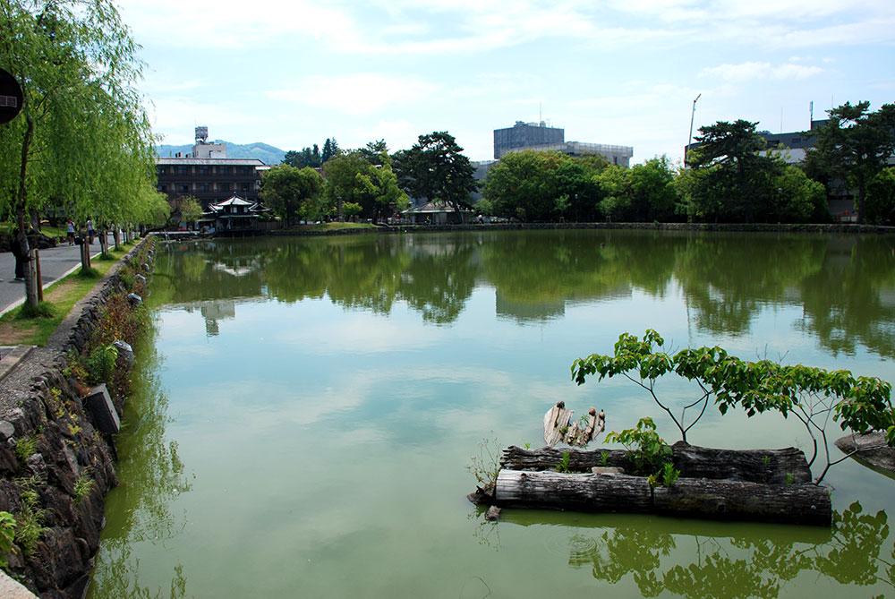 Tortugas en Nara