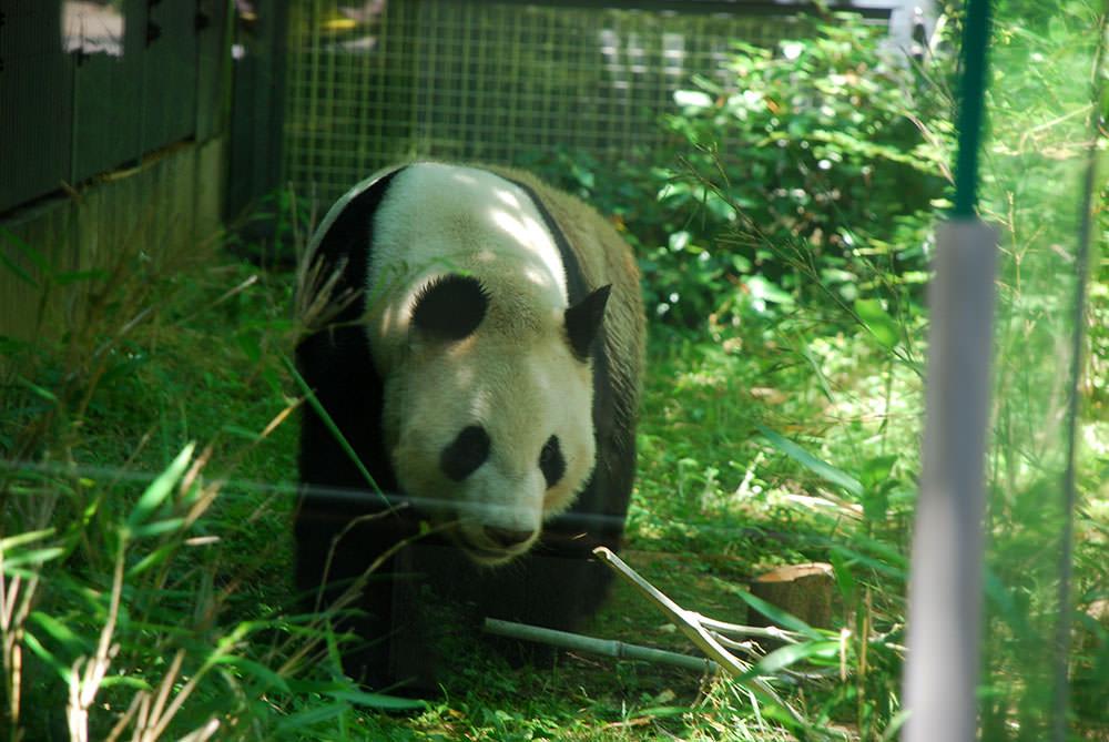 zoo tokio