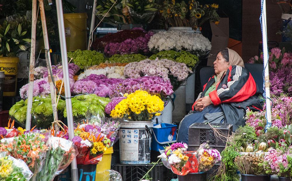 flores ciudad del cabo