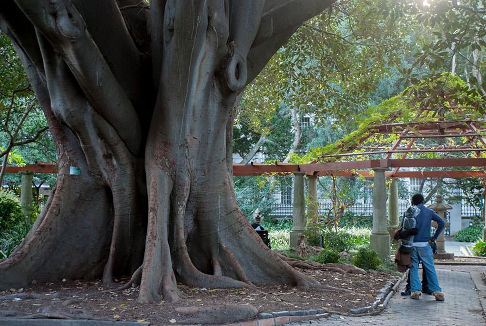 jardines ciudad del cabo