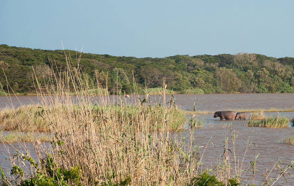 hipopotamos santa lucia