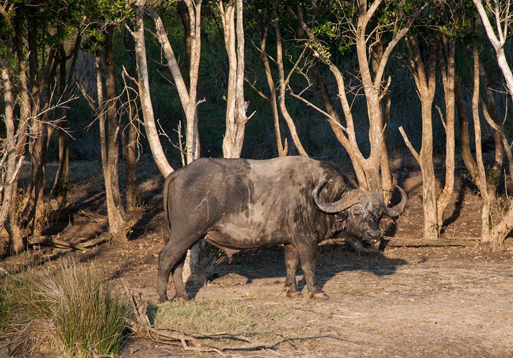 safari fotografico sudafrica