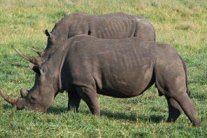 Guía completa para viajar a Sudáfrica: qué ver, dónde dormir, itinerario, tribus, safaris y mucho más