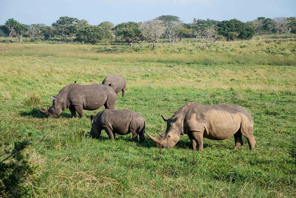 rinos sudafrica