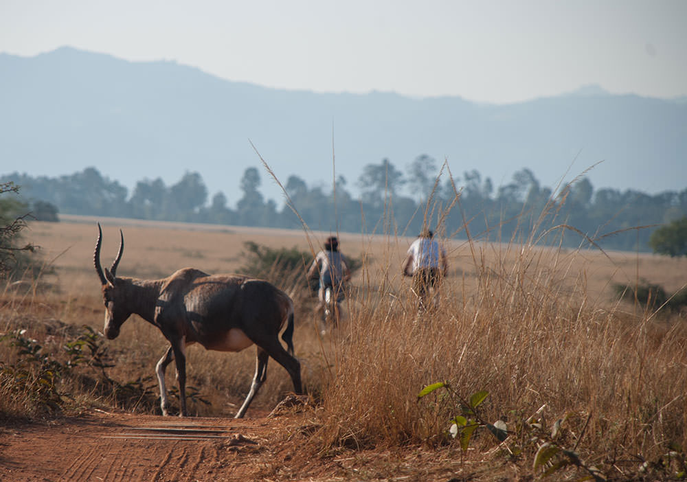 animales suazilandia