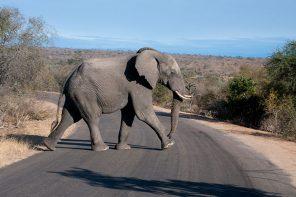 safari parque kruger sudafrica