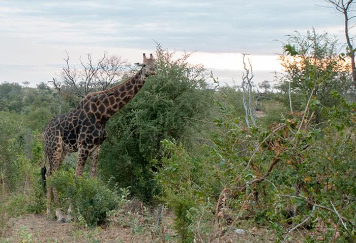 safari parque kruger