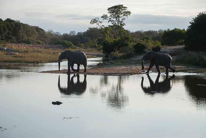 elefantes sabi sands