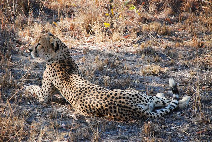 safari sabisands