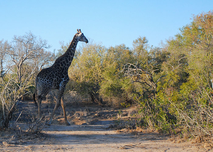 safari sabi sands