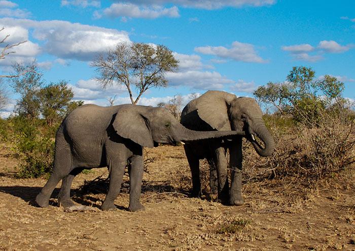 sabisands safari