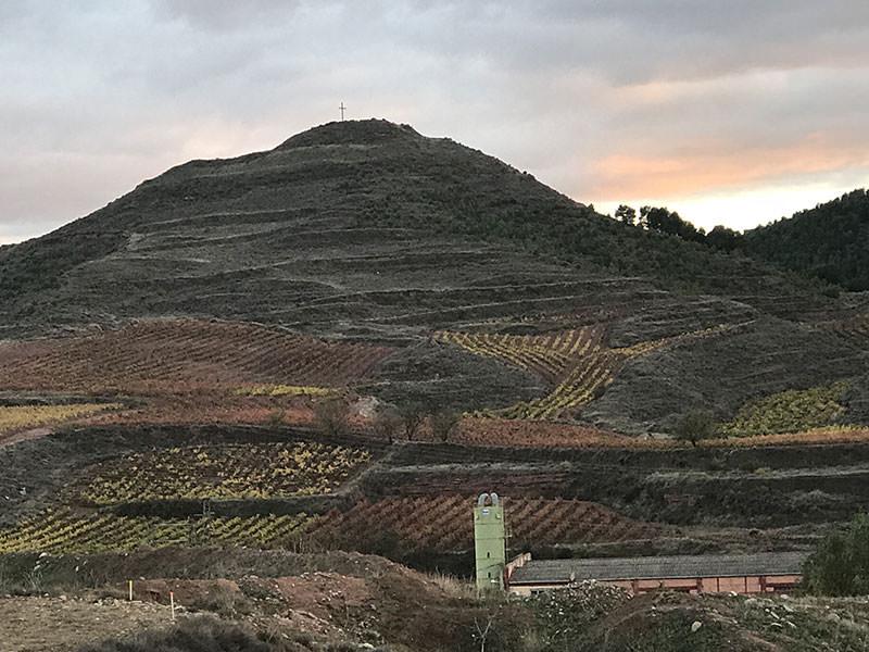 viñedos rioja