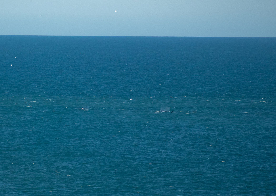 orcas argentina península valdés