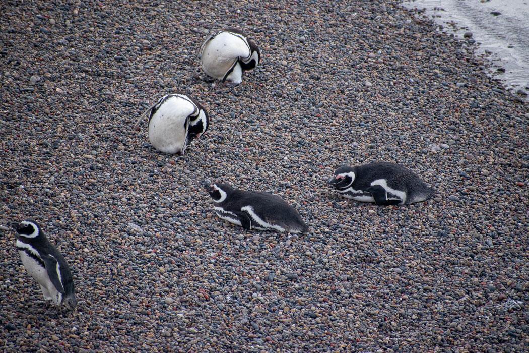 pingüinos península valdés