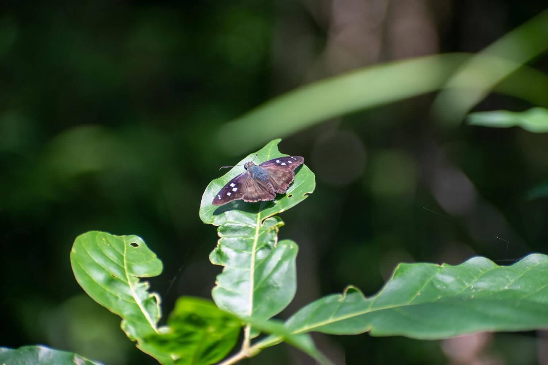mariposa iguazu