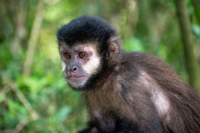 mono iguazu